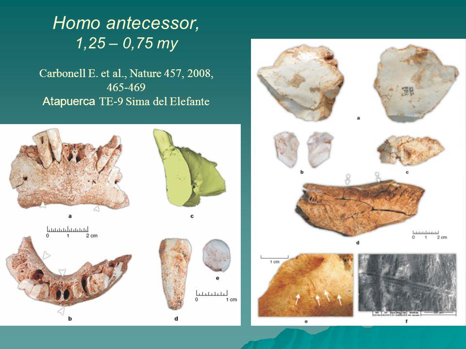 Homo antecessor, 1,25 – 0,75 my Carbonell E.