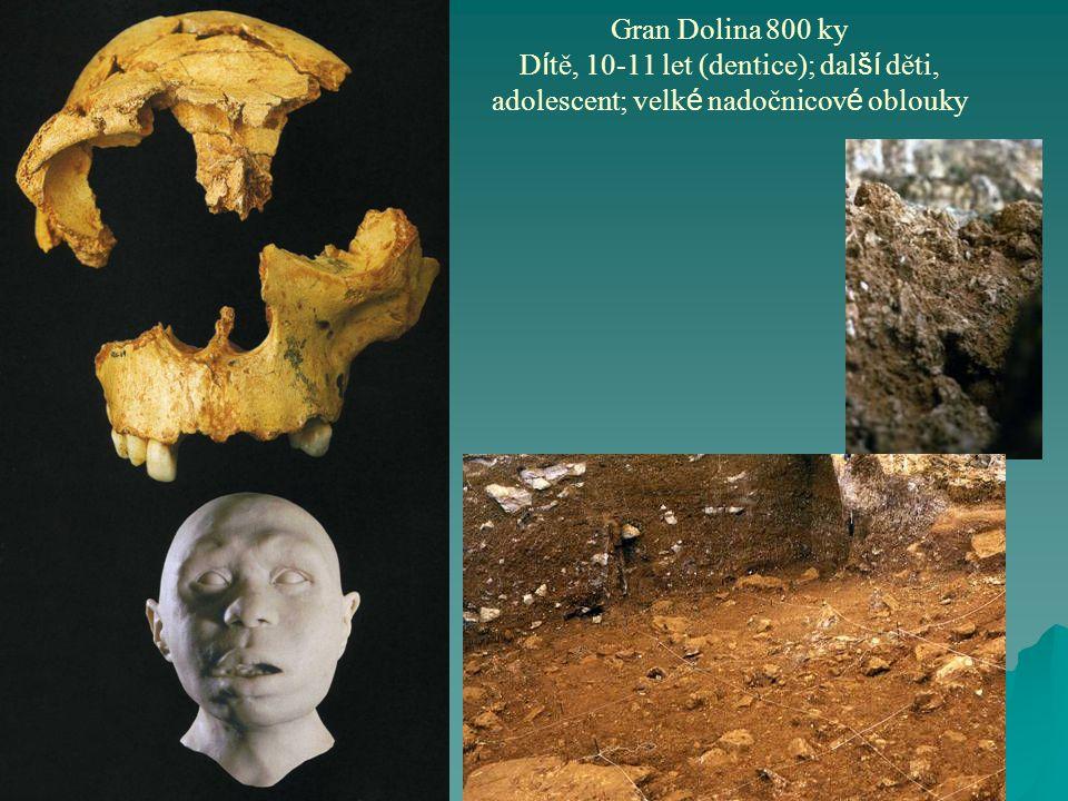Gran Dolina 800 ky D í tě, 10-11 let (dentice); dal ší děti, adolescent; velk é nadočnicov é oblouky