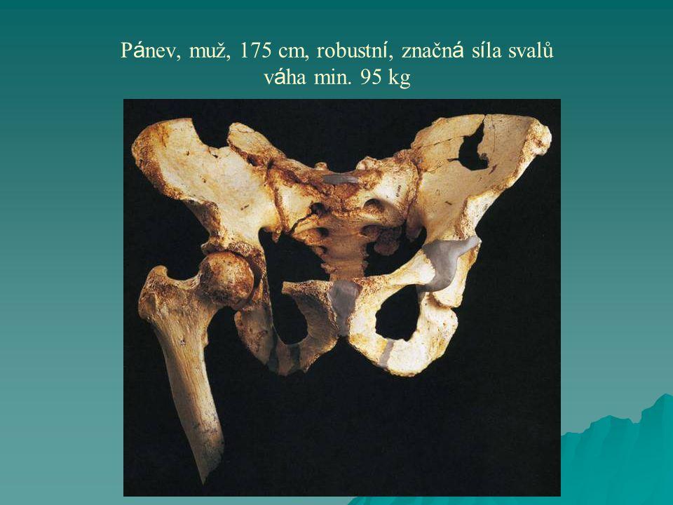 P á nev, muž, 175 cm, robustn í, značn á s í la svalů v á ha min. 95 kg