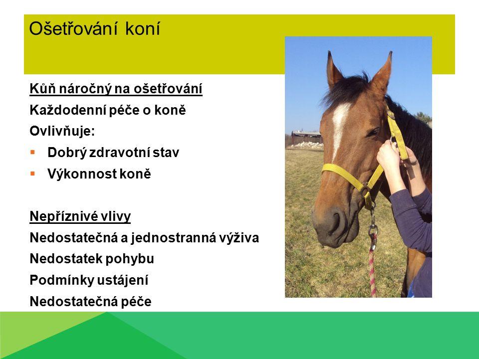 Ošetřování koní Kůň náročný na ošetřování Každodenní péče o koně Ovlivňuje:  Dobrý zdravotní stav  Výkonnost koně Nepříznivé vlivy Nedostatečná a je