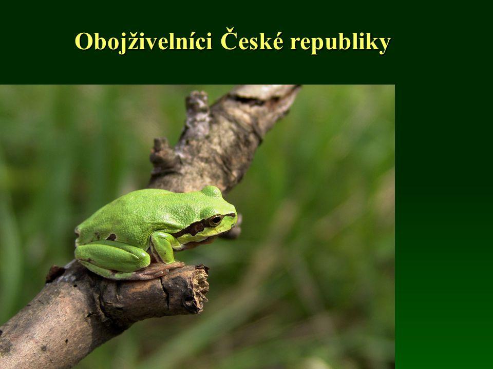 Obojživelníci České republiky