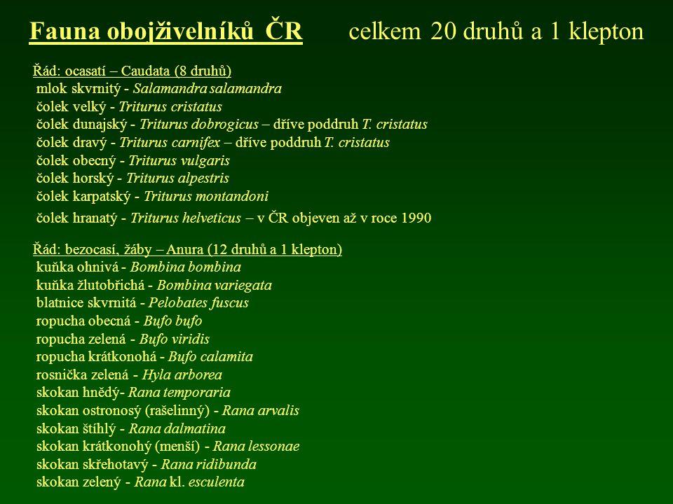 Řád: ocasatí – Caudata (8 druhů) mlok skvrnitý - Salamandra salamandra čolek velký - Triturus cristatus čolek dunajský - Triturus dobrogicus – dříve p