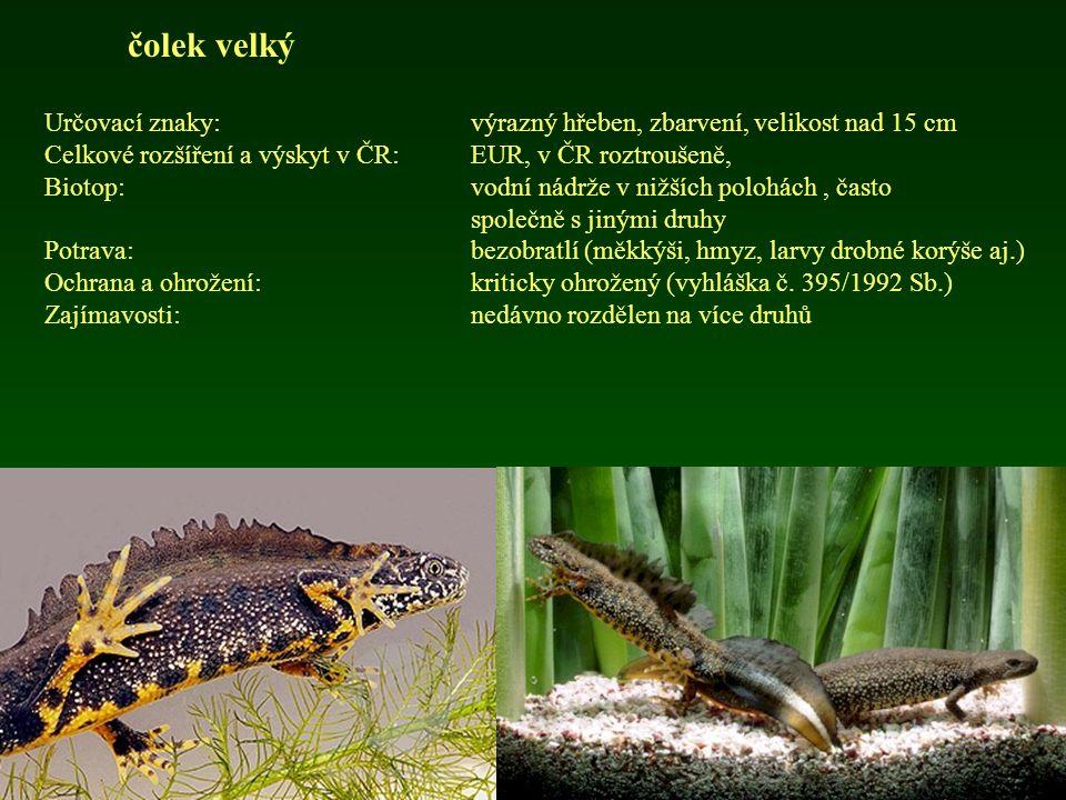 čolek horský Určovací znaky:typické zbarvení, velikost do 12 cm Celkové rozšíření a výskyt v ČR: EUR, v ČR roztroušeně, 49,1% kvadrátů Biotop:lesní biotopy, již od 200 m n.m.