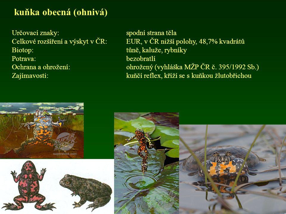 ropucha obecná Určovací znaky:velikost Celkové rozšíření a výskyt v ČR: EUR, v ČR hojná, 79,8% kvadrátů Biotop:lesy, zahrady, obce Potrava:bezobratlí (měkkýši, škvoři, pavouci, larvy hmyzu) Ochrana a ohrožení:ohrožený (vyhláška MŽP ČR č.