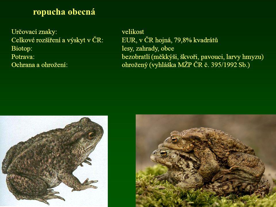 ropucha obecná Určovací znaky:velikost Celkové rozšíření a výskyt v ČR: EUR, v ČR hojná, 79,8% kvadrátů Biotop:lesy, zahrady, obce Potrava:bezobratlí