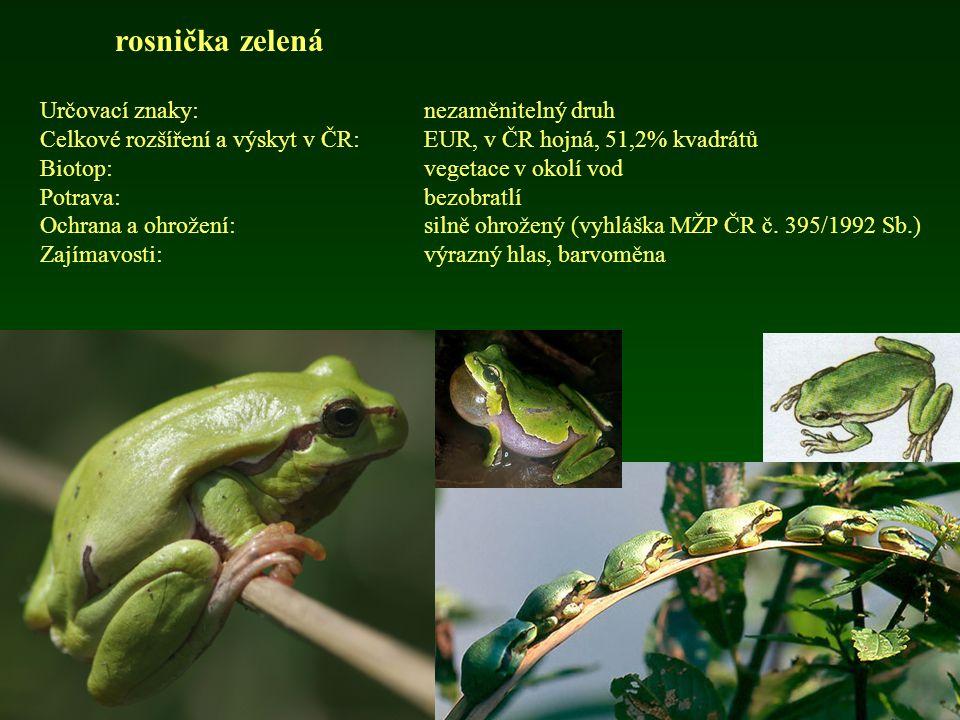 rosnička zelená Určovací znaky:nezaměnitelný druh Celkové rozšíření a výskyt v ČR: EUR, v ČR hojná, 51,2% kvadrátů Biotop:vegetace v okolí vod Potrava