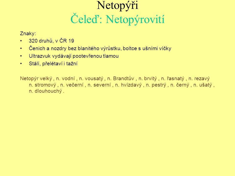 Netopýr vousatý (Myotis mystacinus)