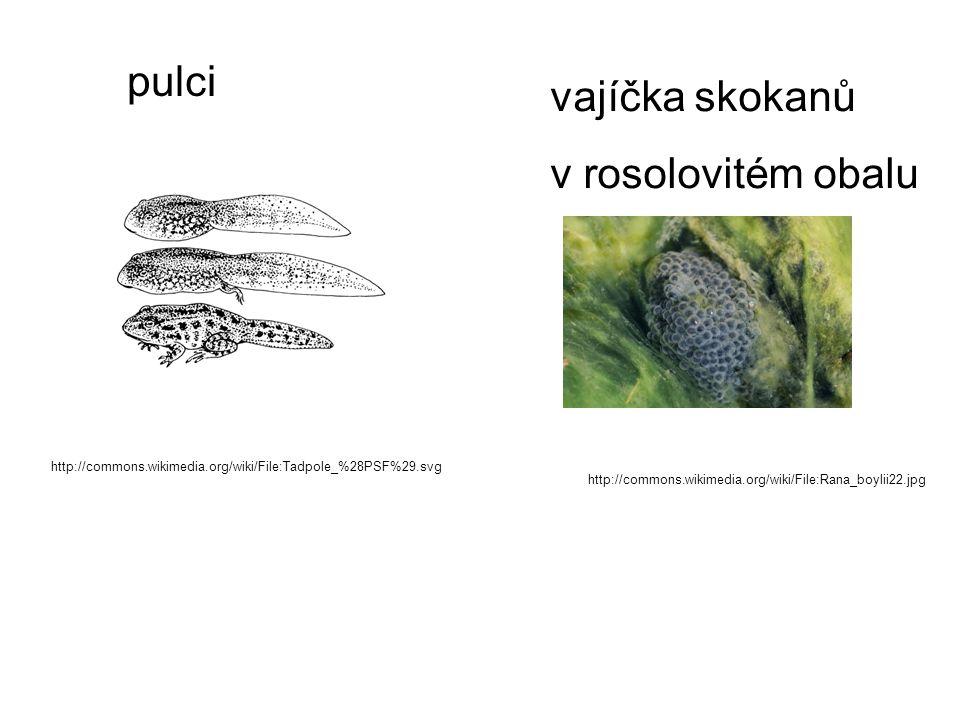 http://commons.wikimedia.org/wiki/File:Tadpole_%28PSF%29.svg http://commons.wikimedia.org/wiki/File:Rana_boylii22.jpg pulci vajíčka skokanů v rosolovi