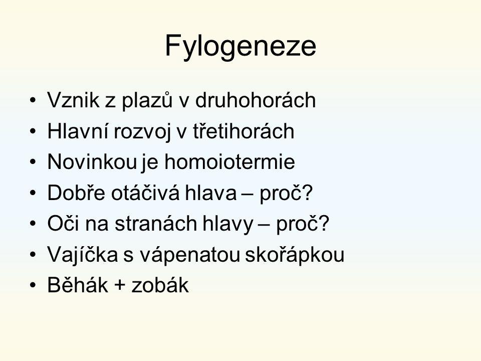 Fylogeneze Vznik z plazů v druhohorách Hlavní rozvoj v třetihorách Novinkou je homoiotermie Dobře otáčivá hlava – proč? Oči na stranách hlavy – proč?