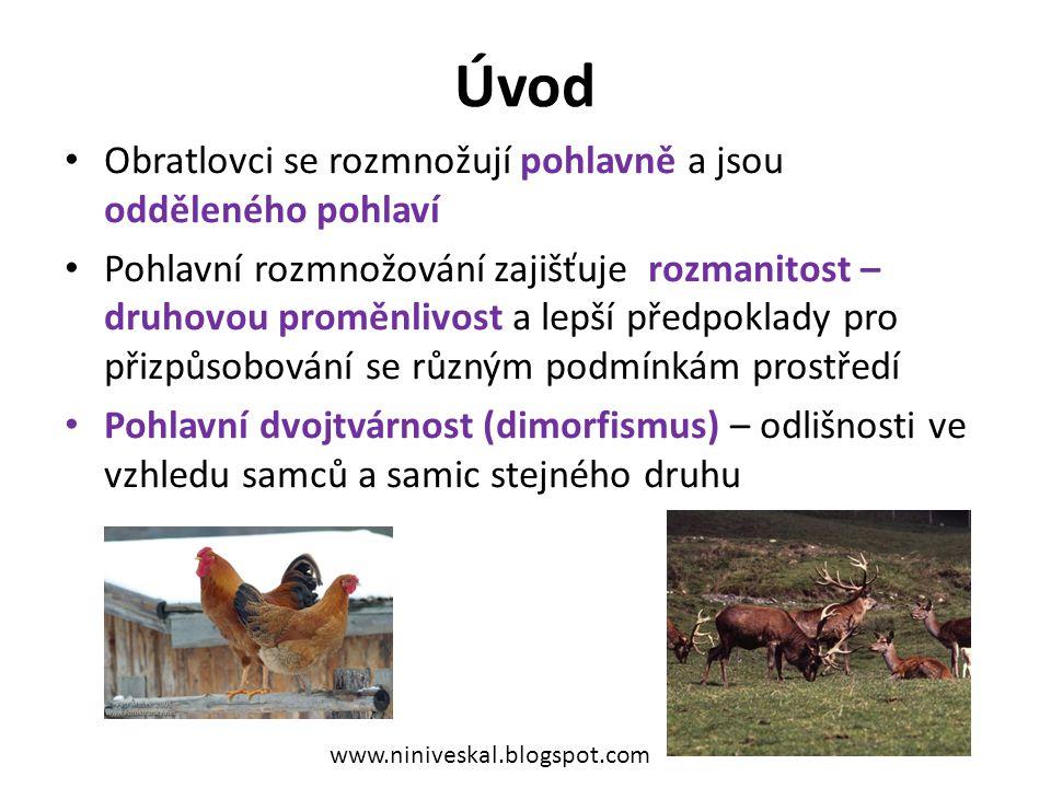 Zdroje Knoz, J.: Obecná zoologie.SPN, Praha, 1 989.