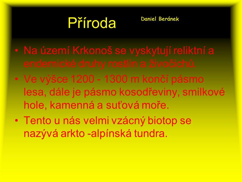 Příroda Daniel Beránek Na území Krkonoš se vyskytují reliktní a endemické druhy rostlin a živočichů.
