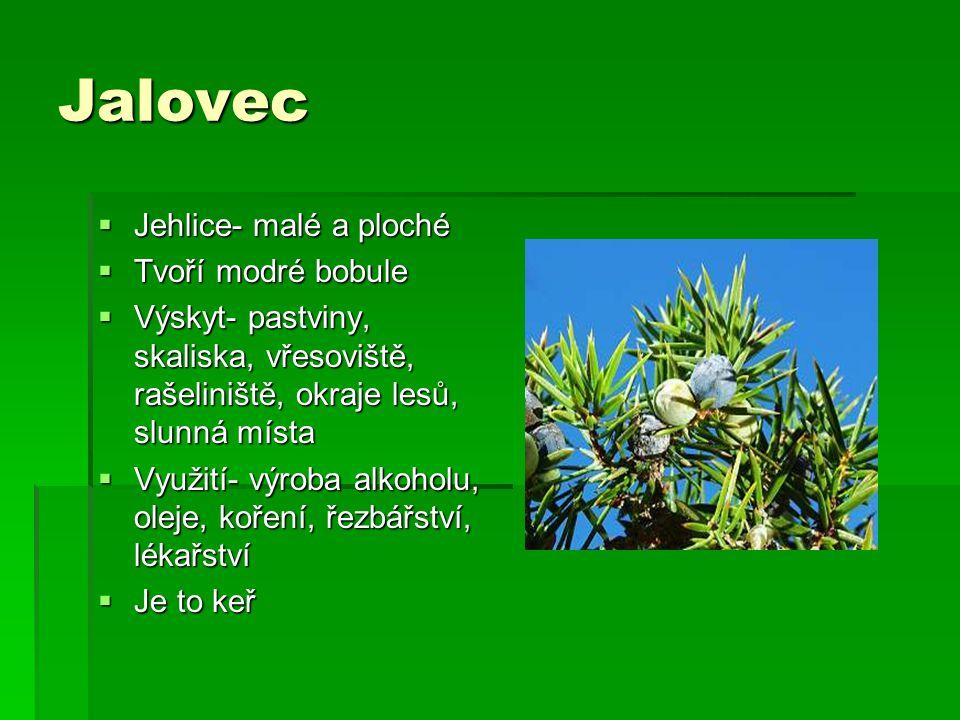 Jalovec  Jehlice- malé a ploché  Tvoří modré bobule  Výskyt- pastviny, skaliska, vřesoviště, rašeliniště, okraje lesů, slunná místa  Využití- výro