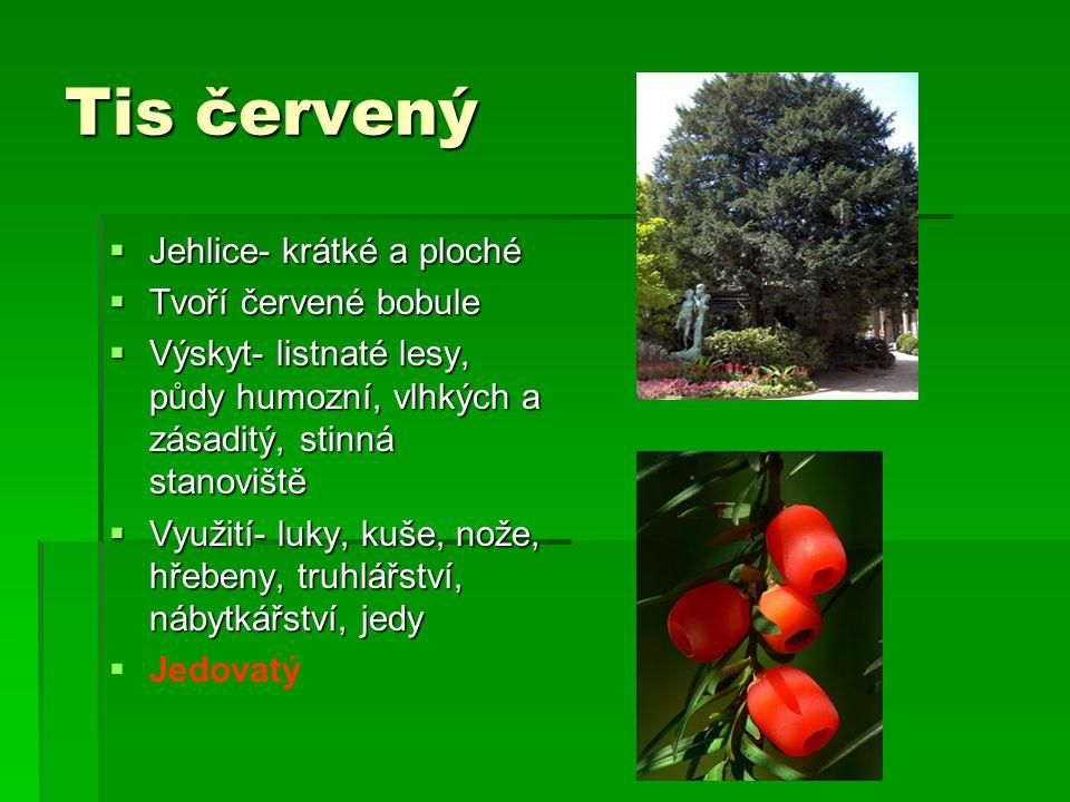 Tis červený  Jehlice- krátké a ploché  Tvoří červené bobule  Výskyt- listnaté lesy, půdy humozní, vlhkých a zásaditý, stinná stanoviště  Využití-