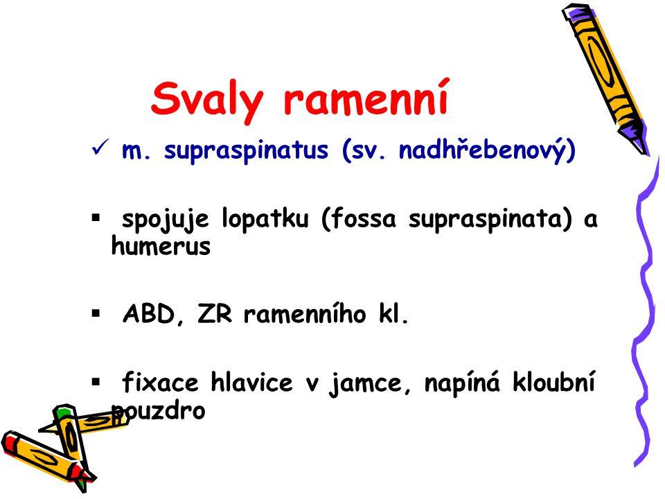 Svaly ramenní m. supraspinatus (sv. nadhřebenový)  spojuje lopatku (fossa supraspinata) a humerus  ABD, ZR ramenního kl.  fixace hlavice v jamce, n