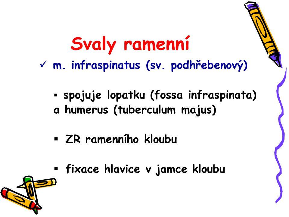 Svaly ramenní m. infraspinatus (sv. podhřebenový)  spojuje lopatku (fossa infraspinata) a humerus (tuberculum majus)  ZR ramenního kloubu  fixace h