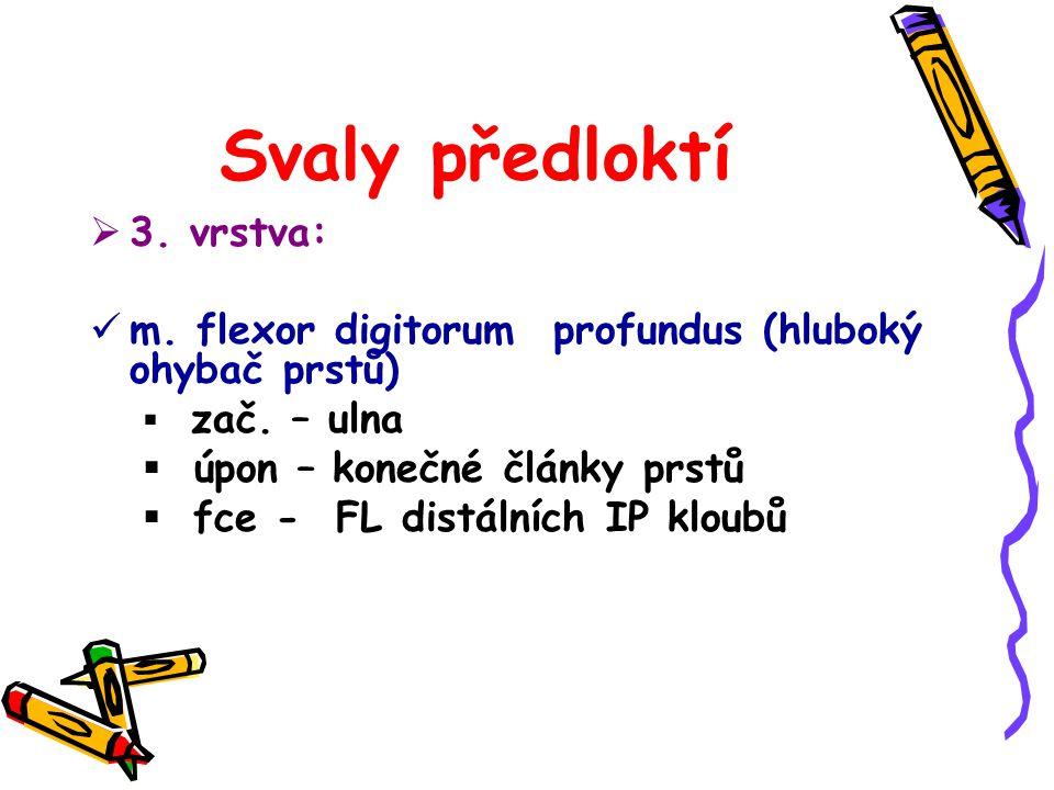  3. vrstva: m. flexor digitorum profundus (hluboký ohybač prstů)  zač. – ulna  úpon – konečné články prstů  fce - FL distálních IP kloubů
