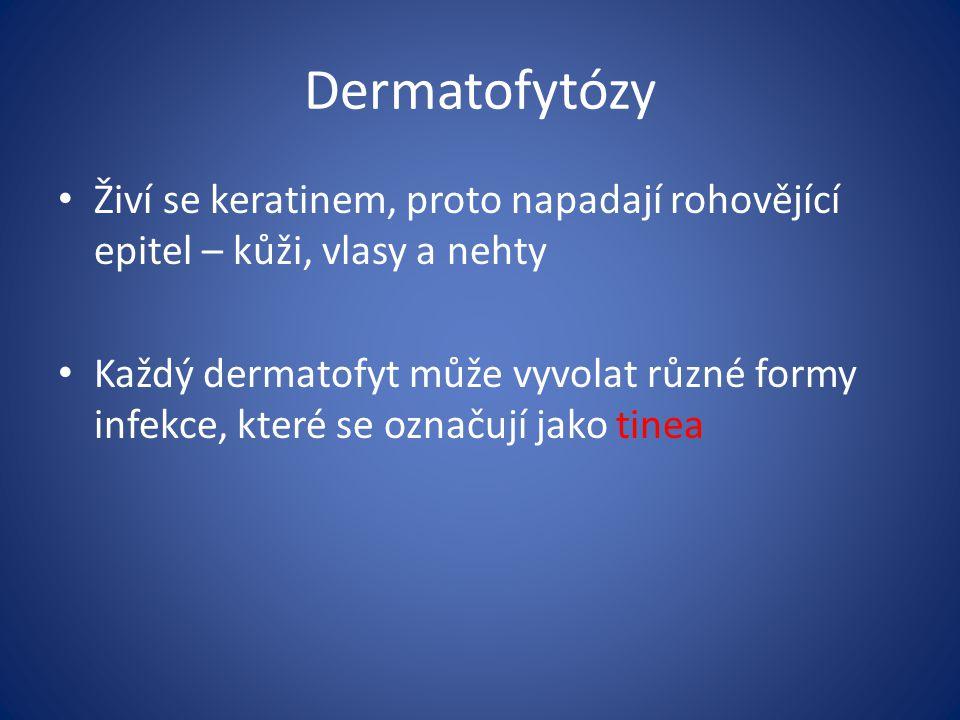 Dermatofytózy Živí se keratinem, proto napadají rohovějící epitel – kůži, vlasy a nehty Každý dermatofyt může vyvolat různé formy infekce, které se označují jako tinea