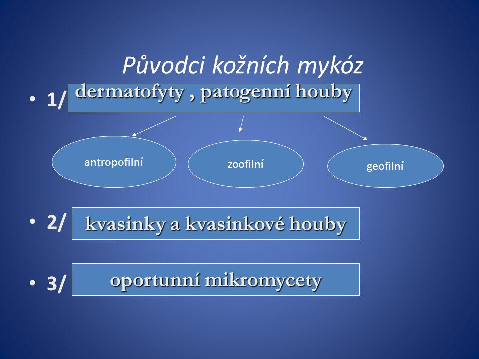 Specifická antimykotika 2/ azolová antimykotika – -bifonazol /Mycospor/ – - ekonazol / Pevaryl/ – - klotrimazol /Canesten, Canifug, Clotrimazol, Imazol, Imazol Plus, Imacort/ – - oxiconazol / Myfungar/ – - ketokonazol / Nizoral/ – - flutrimazol /Micetal/