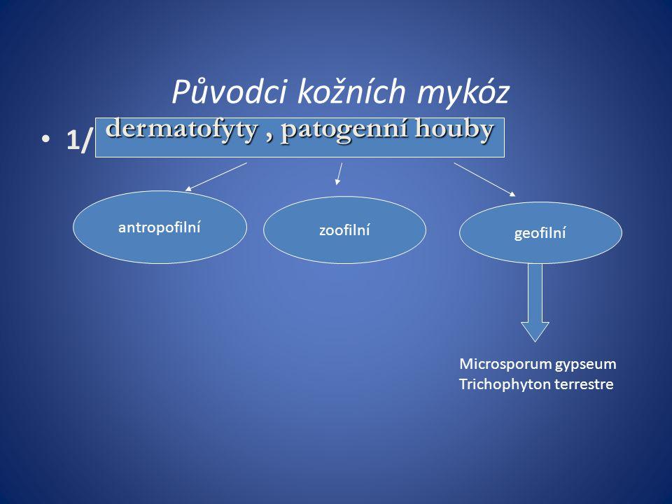 Parazitární onemocnění Scabies (svrab) Pediculosis( zavšivení) Pulicosis ( blechy) Cimicosis ( infestace štěnicemi) Trombidiasis ( srpnová výražka) Ixodidae ( klíštata ) Cerkáriová dermatitida Larva migrans