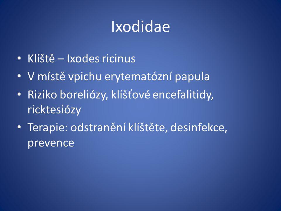 Ixodidae Klíště – Ixodes ricinus V místě vpichu erytematózní papula Riziko boreliózy, klíšťové encefalitidy, ricktesiózy Terapie: odstranění klíštěte,