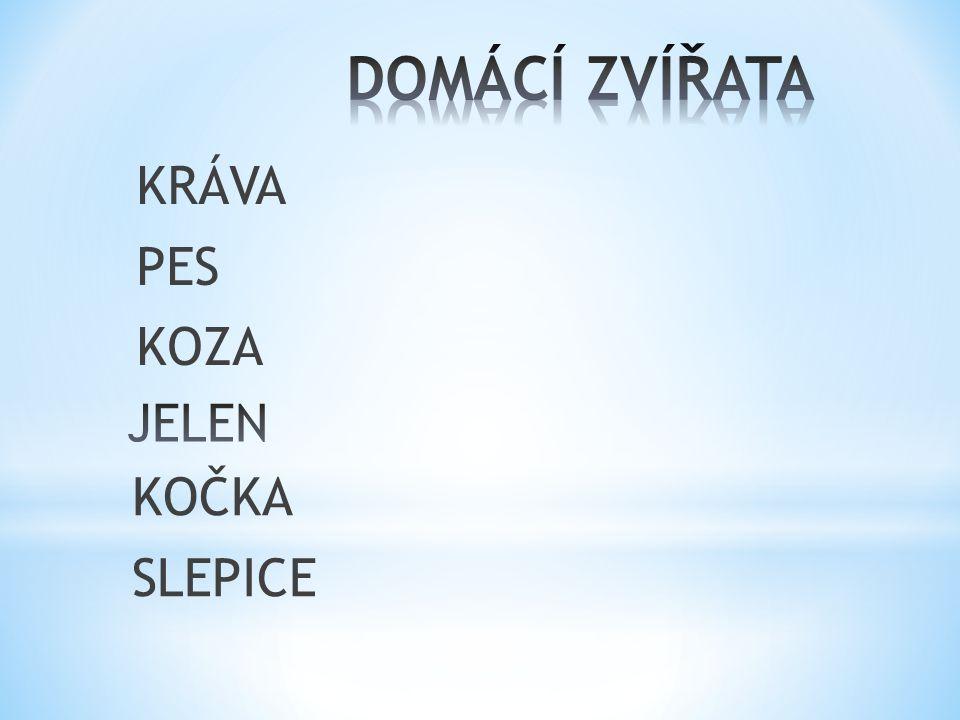 KRÁVA PES KOZA KOČKA SLEPICE