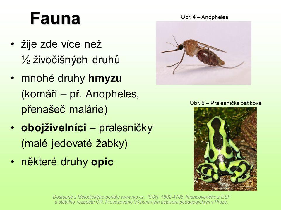 Fauna žije zde více než ½ živočišných druhů mnohé druhy hmyzu (komáři – př. Anopheles, přenašeč malárie) obojživelníci – pralesničky (malé jedovaté ža