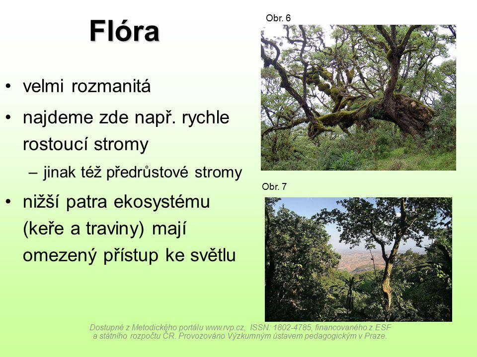 Flóra velmi rozmanitá najdeme zde např. rychle rostoucí stromy –jinak též předrůstové stromy nižší patra ekosystému (keře a traviny) mají omezený přís