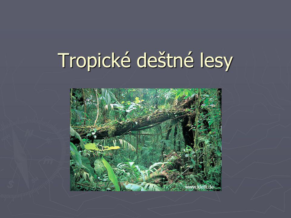 Tropické deštné lesy www.klett.de