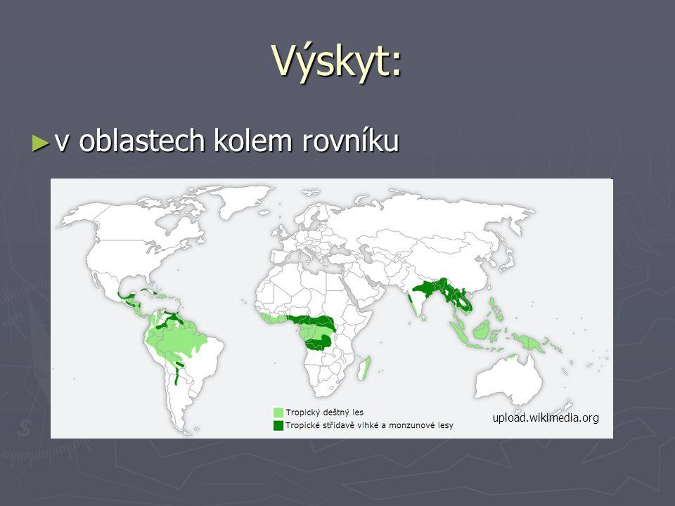 Výskyt: ► v oblastech kolem rovníku upload.wikimedia.org