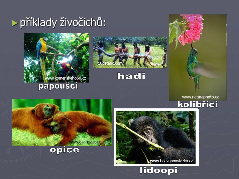 ► příklady živočichů: www.komenskeho66.cz www.naturephoto.cz www.geo-magazin.cz www.hedvabnastezka.cz t3.gstatic.com