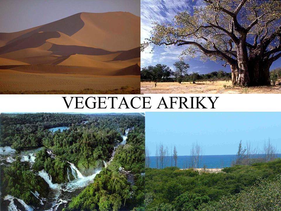 Tropický deštný les: Konžská pánev, vzácná dřeva (mahagon, eben) Savany: nejrozlehlejší, baobab, NP Pouště: sukulenty, palma datlová Středomořská vegetace: sever a jih (korkový dub, vavřín aj.) + výšková stupňovitost VÍCE ZDE
