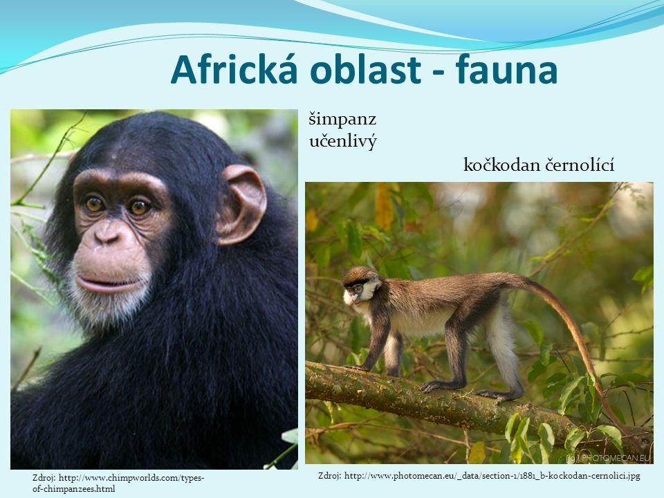 Africká oblast - fauna kočkodan černolící Zdroj: http://www.photomecan.eu/_data/section-1/1881_b-kockodan-cernolici.jpg Zdroj: http://www.chimpworlds.