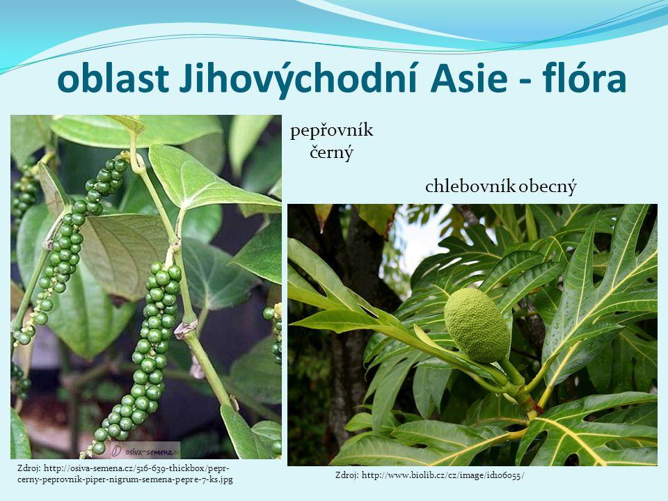 oblast Jihovýchodní Asie - flóra Zdroj: http://osiva-semena.cz/516-639-thickbox/pepr- cerny-peprovnik-piper-nigrum-semena-pepre-7-ks.jpg pepřovník čer