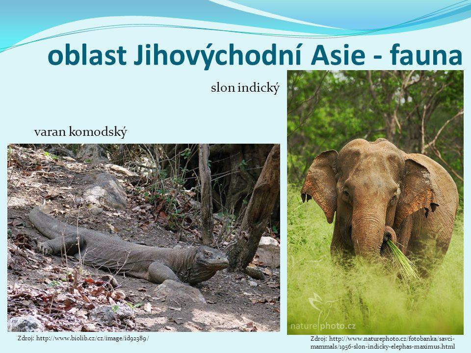 oblast Jihovýchodní Asie - fauna varan komodský Zdroj: http://www.biolib.cz/cz/image/id92389/ slon indický Zdroj: http://www.naturephoto.cz/fotobanka/