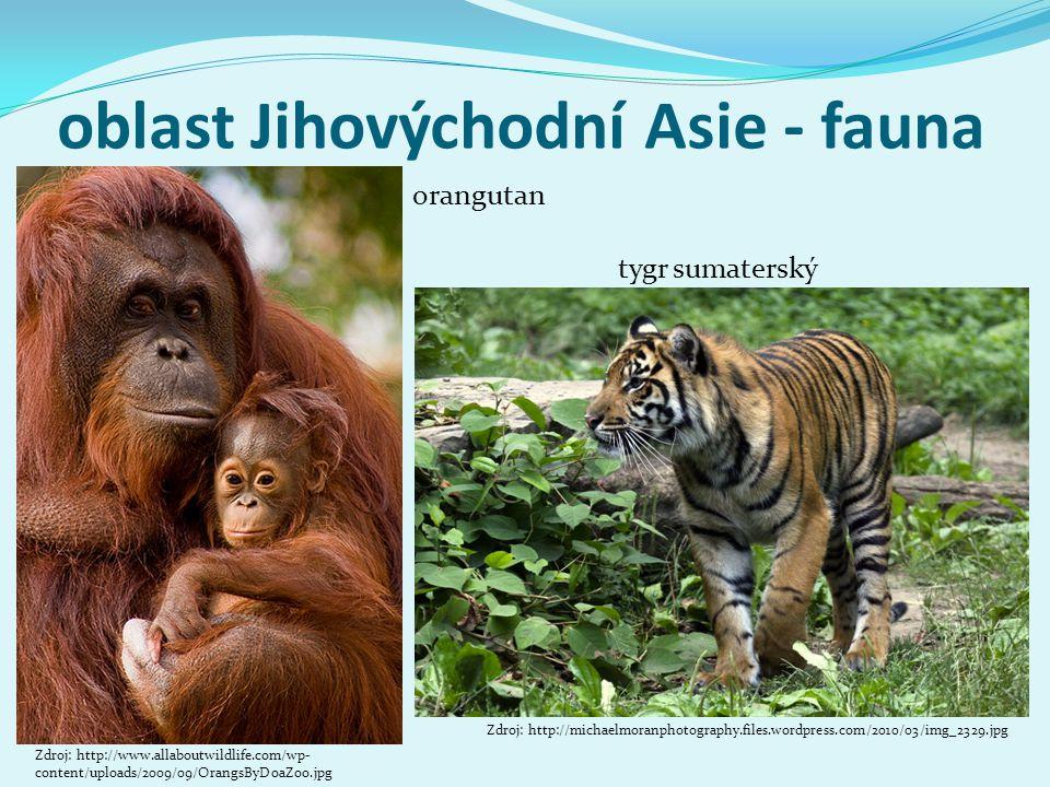 oblast Jihovýchodní Asie - fauna tygr sumaterský Zdroj: http://michaelmoranphotography.files.wordpress.com/2010/03/img_2329.jpg Zdroj: http://www.alla