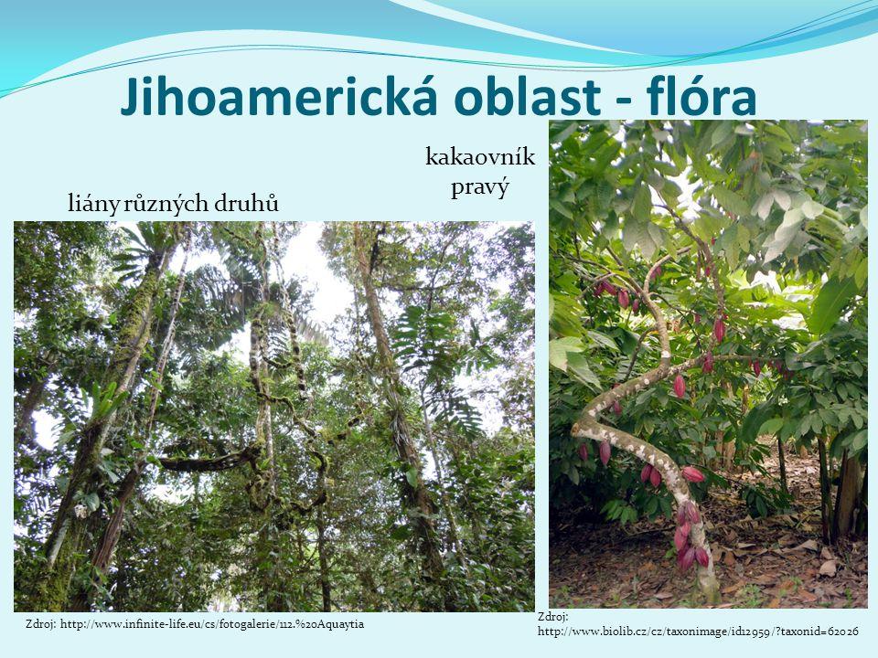 Jihoamerická oblast - flóra Zdroj: http://www.infinite-life.eu/cs/fotogalerie/112.%20Aquaytia liány různých druhů kakaovník pravý Zdroj: http://www.bi
