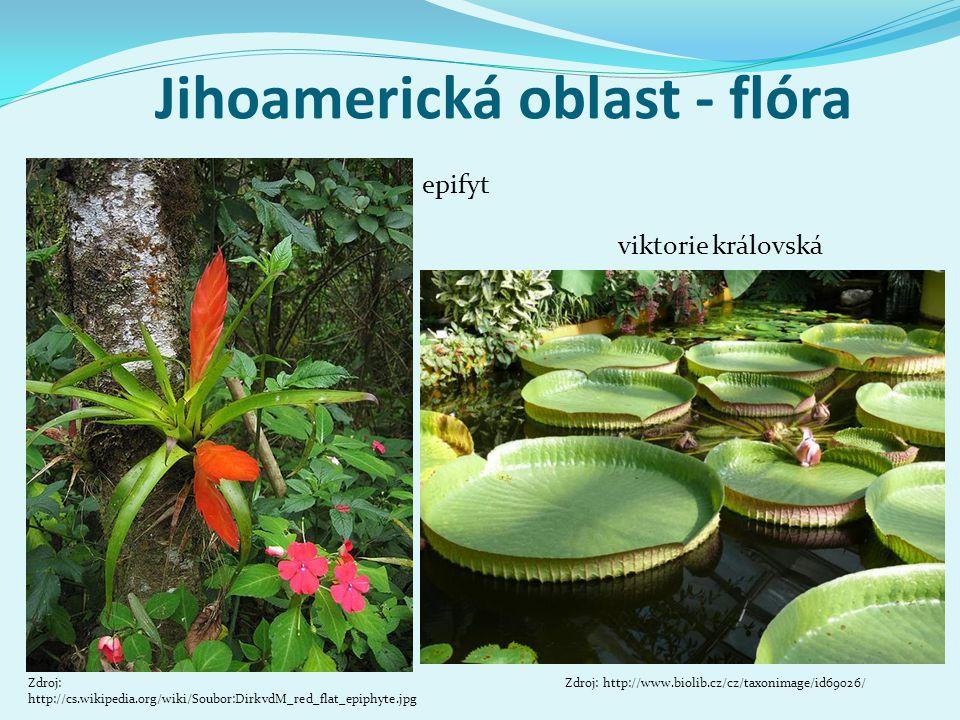 Jihoamerická oblast - flóra epifyt Zdroj: http://cs.wikipedia.org/wiki/Soubor:DirkvdM_red_flat_epiphyte.jpg viktorie královská Zdroj: http://www.bioli