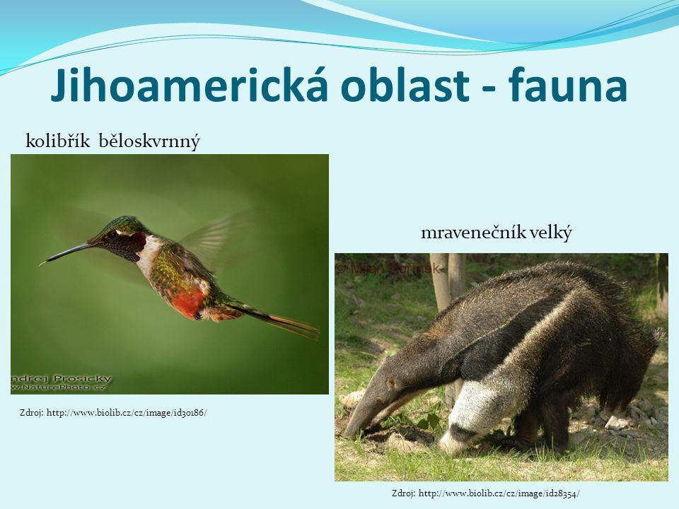 Jihoamerická oblast - fauna jaguár americký kapybara Zdroj: http://www.photonature.cz/jizni-amerika/brazil/tropicky- pantanal/1272-jaguar-americky-panthera-onca-brazilie.html#foto Zdroj: http://www.biolib.cz/cz/image/id144346/