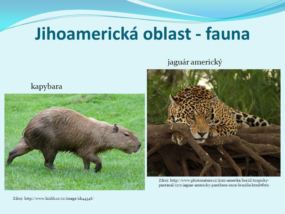 Jihoamerická oblast - fauna jaguár americký kapybara Zdroj: http://www.photonature.cz/jizni-amerika/brazil/tropicky- pantanal/1272-jaguar-americky-pan