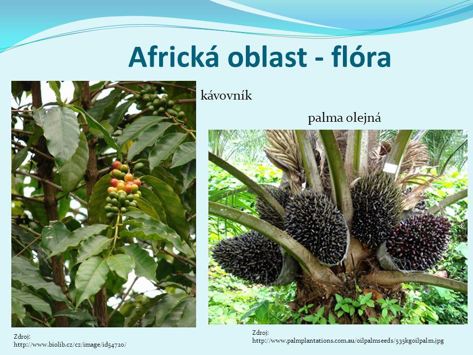 Africká oblast - fauna okapi Zdroj: http://www.foto-priban.cz/images/detail/d7- 3536-01-gorila_7129.jpg gorila horská Zdroj: http://www.keyafrica.com/en/Africa_L2/Nature/Nature- and-Wildlife_C823/Okapi-Wildlife-Reserve_O1599409