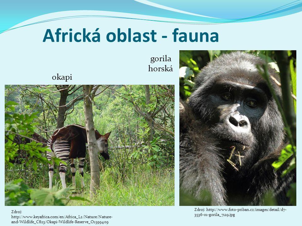 Africká oblast - fauna okapi Zdroj: http://www.foto-priban.cz/images/detail/d7- 3536-01-gorila_7129.jpg gorila horská Zdroj: http://www.keyafrica.com/