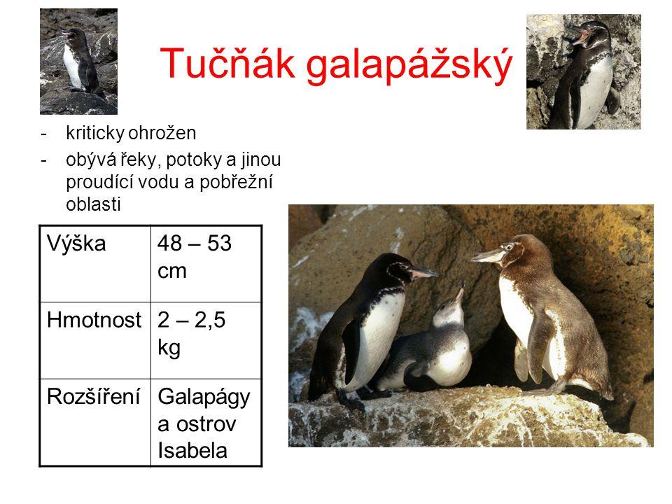 Tučňák galapážský -kriticky ohrožen -obývá řeky, potoky a jinou proudící vodu a pobřežní oblasti Výška48 – 53 cm Hmotnost2 – 2,5 kg RozšířeníGalapágy
