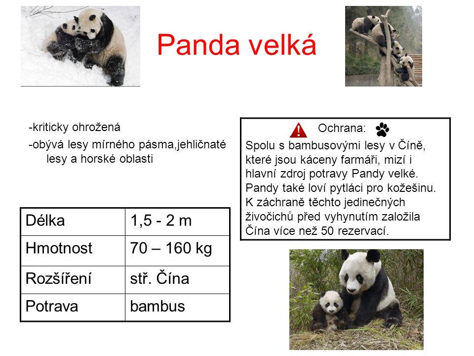 Panda velká -kriticky ohrožená -obývá lesy mírného pásma,jehličnaté lesy a horské oblasti Délka1,5 - 2 m Hmotnost70 – 160 kg Rozšířenístř. Čína Potrav