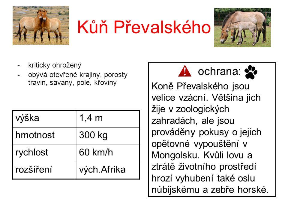 Kůň Převalského -kriticky ohrožený -obývá otevřené krajiny, porosty travin, savany, pole, křoviny výška1,4 m hmotnost300 kg rychlost60 km/h rozšířenív