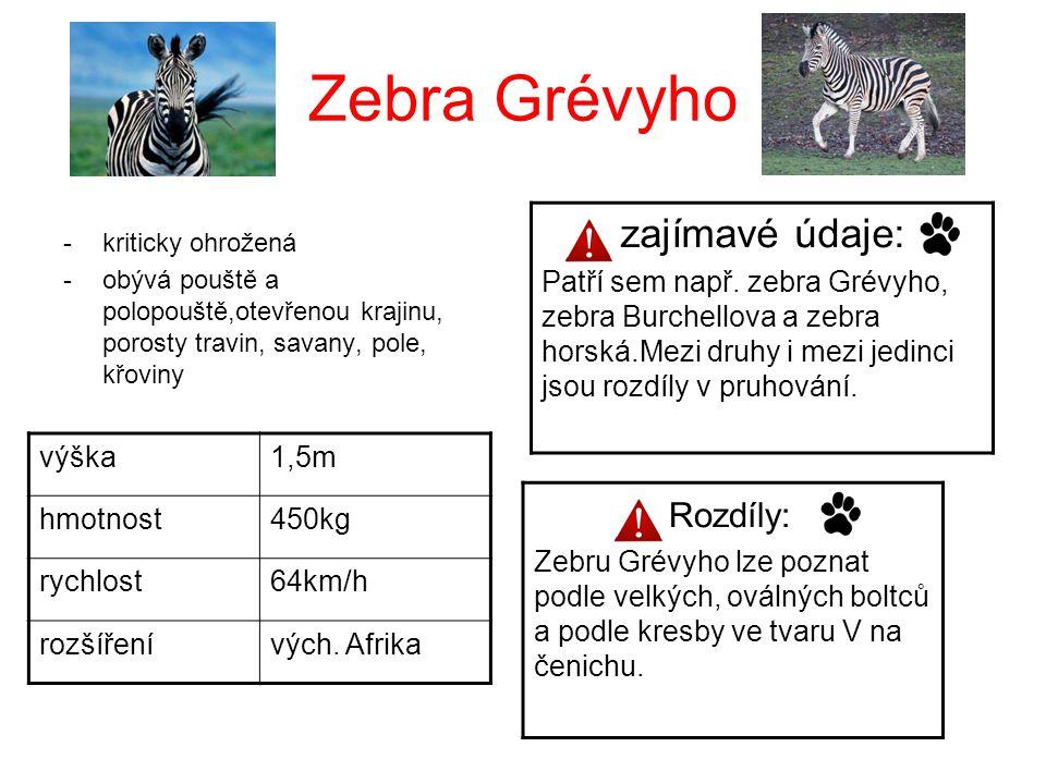 Zebra Grévyho -kriticky ohrožená -obývá pouště a polopouště,otevřenou krajinu, porosty travin, savany, pole, křoviny výška1,5m hmotnost450kg rychlost6