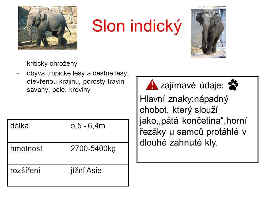 Slon indický -kriticky ohrožený -obývá tropické lesy a deštné lesy, otevřenou krajinu, porosty travin, savany, pole, křoviny délka5,5 - 6,4m hmotnost2
