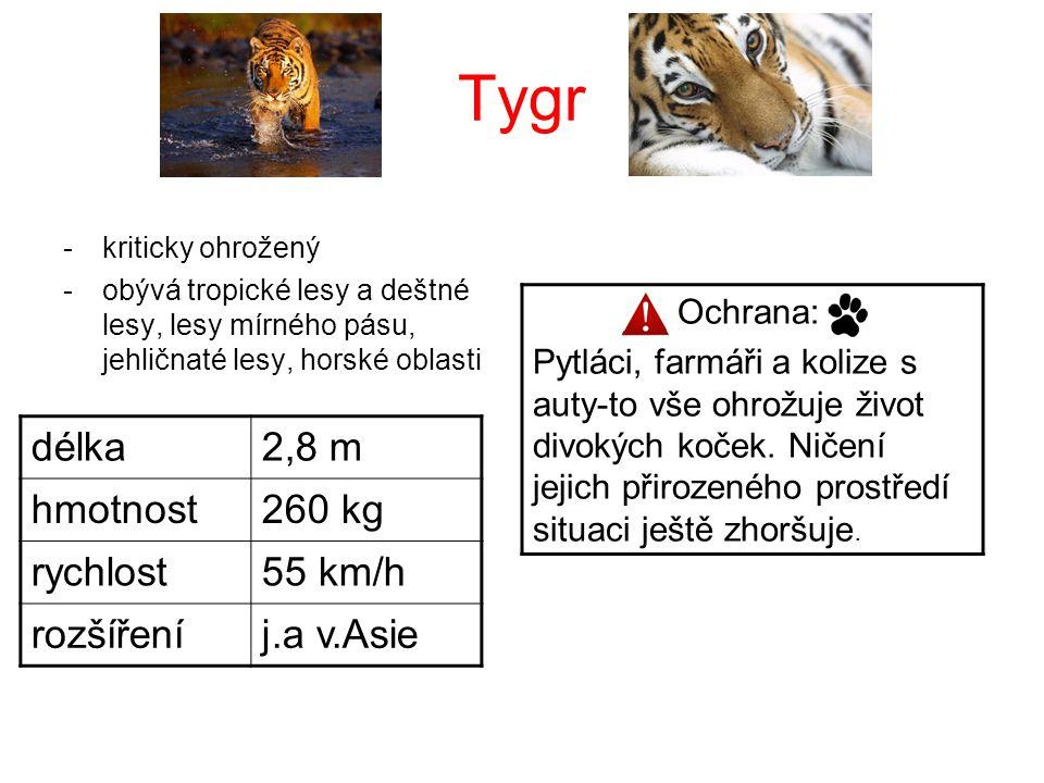 Tygr -kriticky ohrožený -obývá tropické lesy a deštné lesy, lesy mírného pásu, jehličnaté lesy, horské oblasti délka2,8 m hmotnost260 kg rychlost55 km
