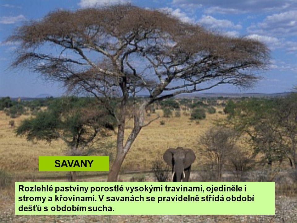 SAVANY Rozlehlé pastviny porostlé vysokými travinami, ojediněle i stromy a křovinami. V savanách se pravidelně střídá období dešťů s obdobím sucha.