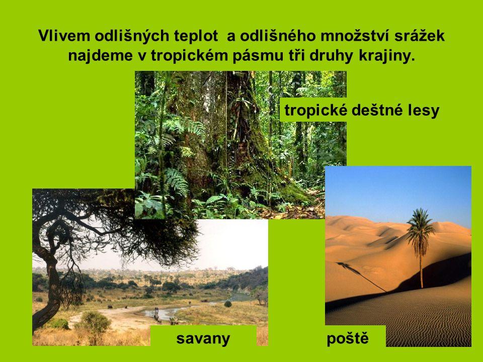 Vlivem odlišných teplot a odlišného množství srážek najdeme v tropickém pásmu tři druhy krajiny. tropické deštné lesy savanypoště
