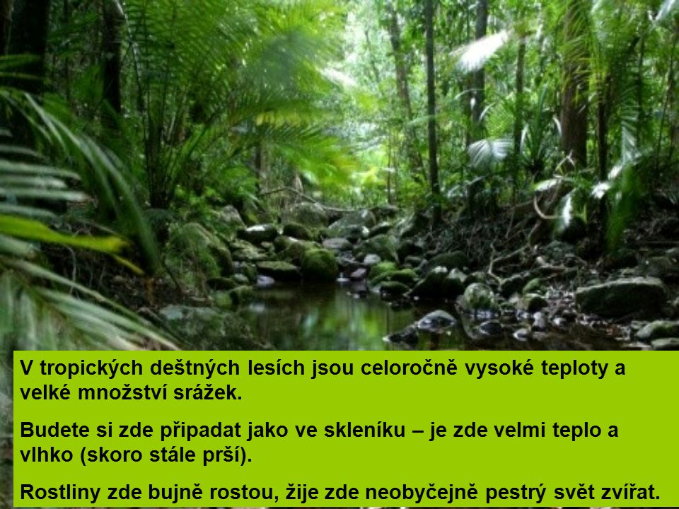 V tropických deštných lesích jsou celoročně vysoké teploty a velké množství srážek. Budete si zde připadat jako ve skleníku – je zde velmi teplo a vlh